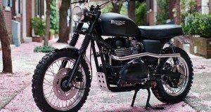 Triumph T100 Jack Pine